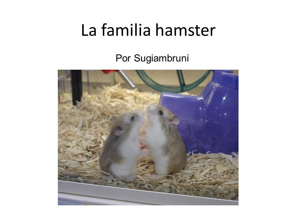 La familia hamster Por Sugiambruni
