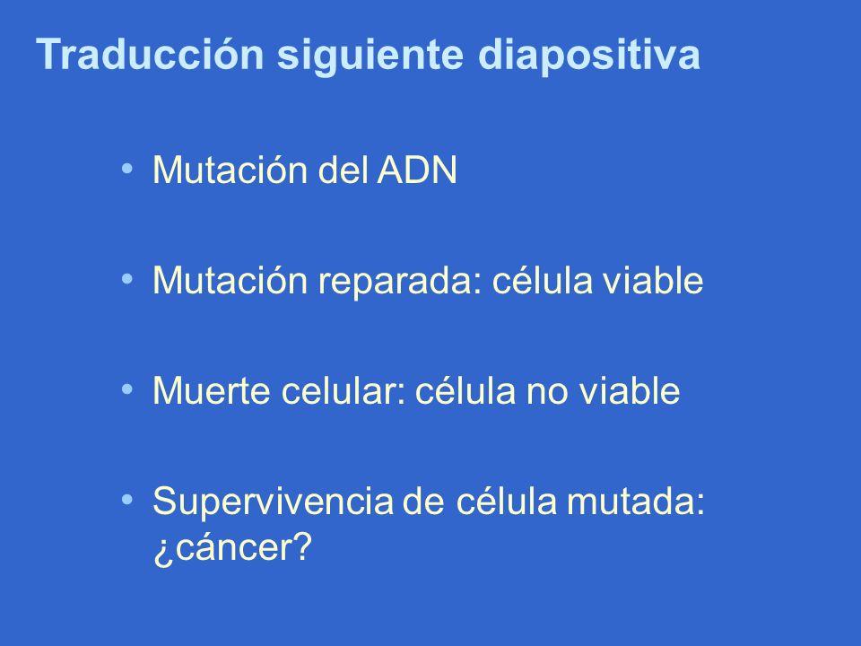 Traducción siguiente diapositiva Mutación del ADN Mutación reparada: célula viable Muerte celular: célula no viable Supervivencia de célula mutada: ¿c