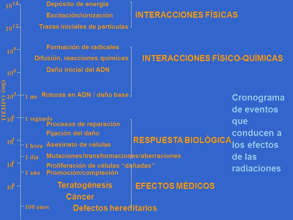 10 -6 10 -12 10 -9 10 -15 10 -3 1 segundo 1 hora 1 día 1 año 100 años 1 ms 10 0 9 6 3 Depósito de energía Excitación/ionización Trazas iniciales de pa