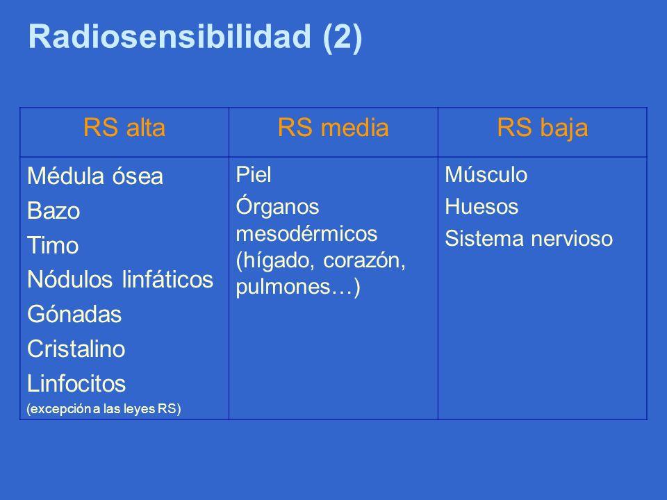 Radiosensibilidad (2) RS altaRS mediaRS baja Médula ósea Bazo Timo Nódulos linfáticos Gónadas Cristalino Linfocitos (excepción a las leyes RS) Piel Ór