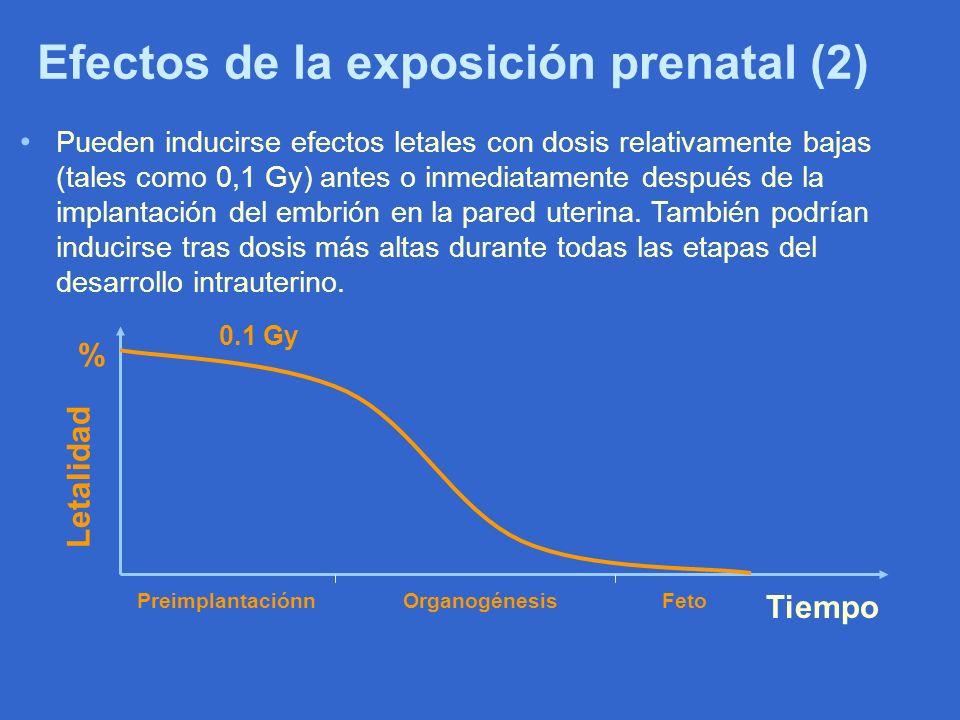 Efectos de la exposición prenatal (2) Pueden inducirse efectos letales con dosis relativamente bajas (tales como 0,1 Gy) antes o inmediatamente despué
