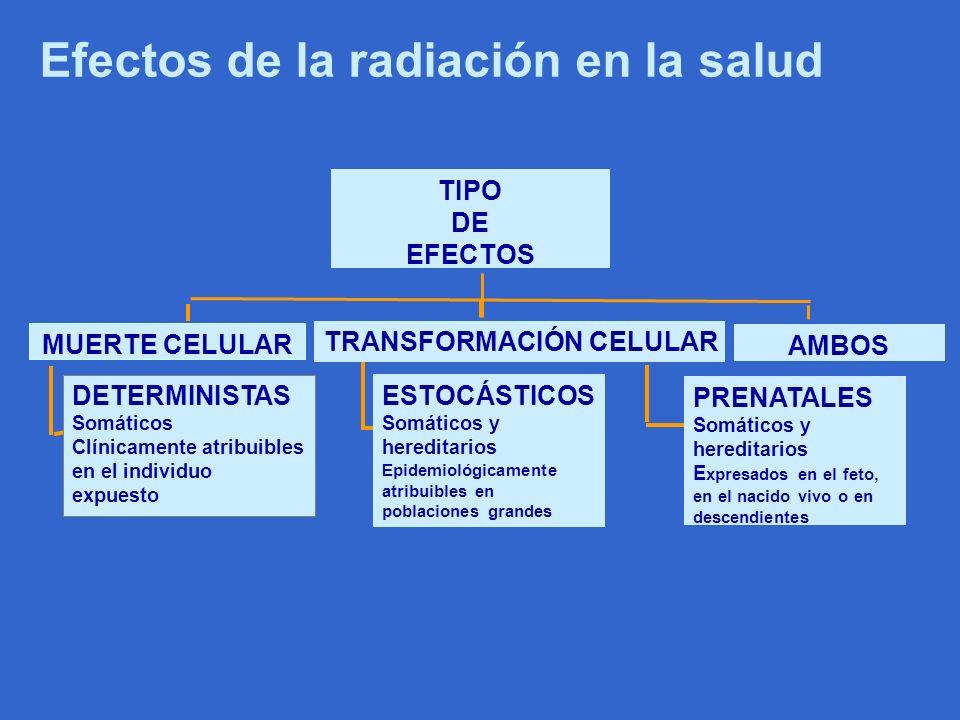 Efectos biológicos de la radiación ionizante Deterministas – Ej., opacidades en el cristalino, daños en piel, infertilidad, depilación, etc Estocásticos – Cáncer, efectos genéticos