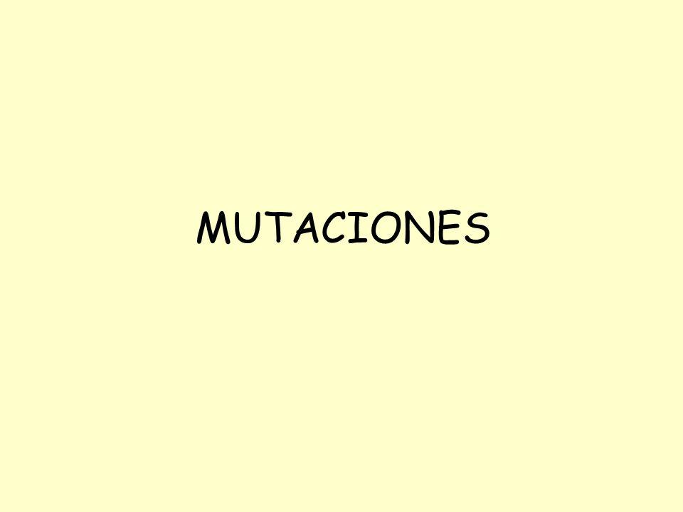 Oscuridad por 24 h Dilución seriada Mutagénesis y selección Plaqueo en medio sólido Clones seleccionados Re-chequeo Caracterización Determinar la fijación de la mutación ControlCondición de selección