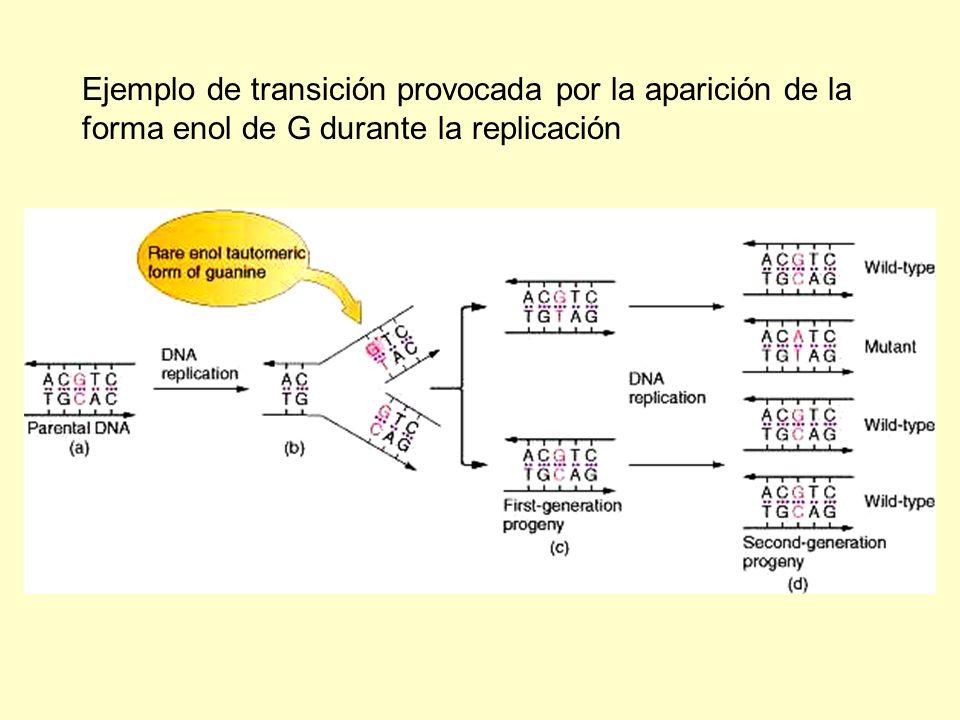 Ejemplo de transición provocada por la aparición de la forma enol de G durante la replicación