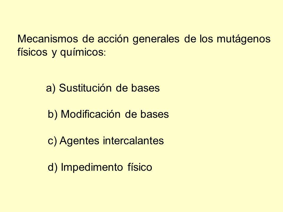 Mecanismos de acción generales de los mutágenos físicos y químicos : a) Sustitución de bases b) Modificación de bases c) Agentes intercalantes d) Impe