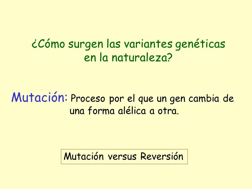 ¿Cómo surgen las variantes genéticas en la naturaleza? Mutación: Proceso por el que un gen cambia de una forma alélica a otra. Mutación versus Reversi