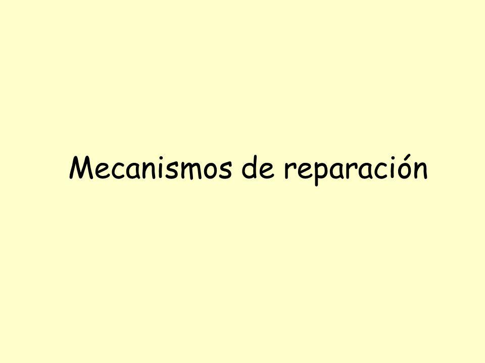 Mecanismos de reparación