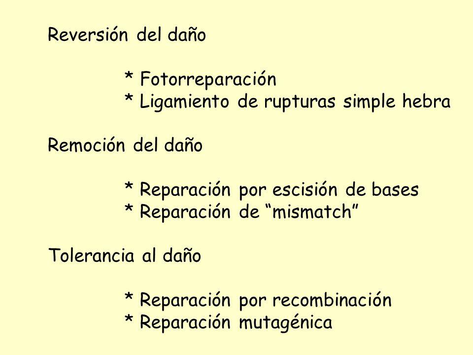Reversión del daño * Fotorreparación * Ligamiento de rupturas simple hebra Remoción del daño * Reparación por escisión de bases * Reparación de mismat