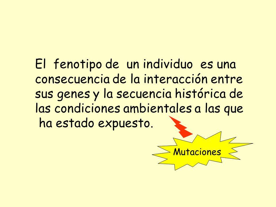 El fenotipo de un individuo es una consecuencia de la interacción entre sus genes y la secuencia histórica de las condiciones ambientales a las que ha