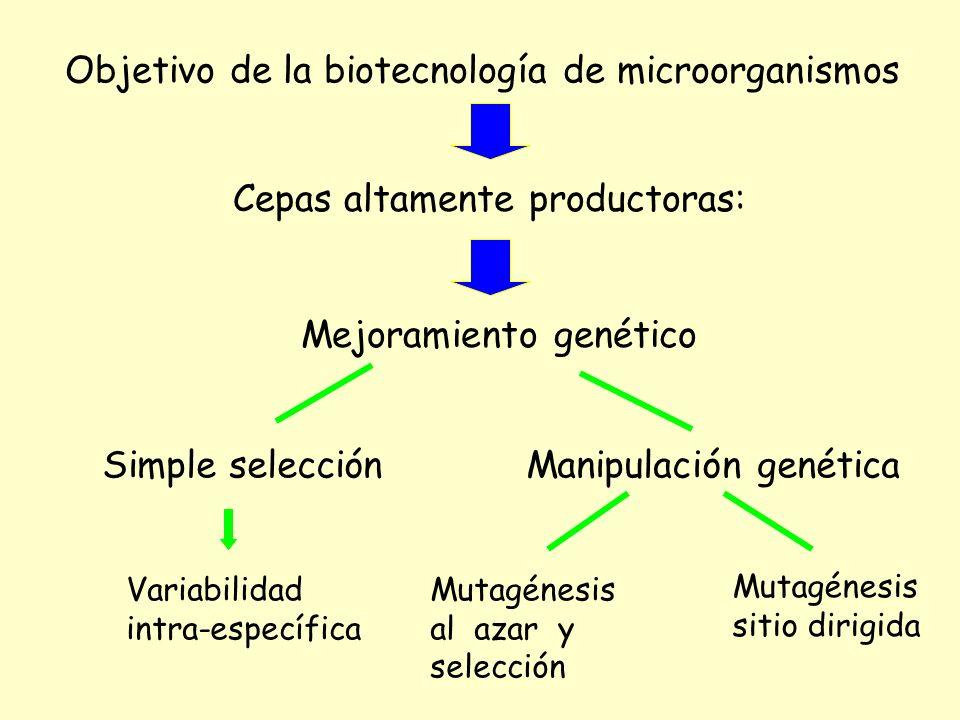 Mejoramiento genético Simple selección Variabilidad intra-específica Manipulación genética Mutagénesis al azar y selección Mutagénesis sitio dirigida