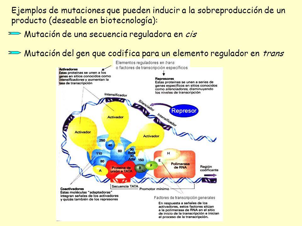 Ejemplos de mutaciones que pueden inducir a la sobreproducción de un producto (deseable en biotecnología): Mutación de una secuencia reguladora en cis