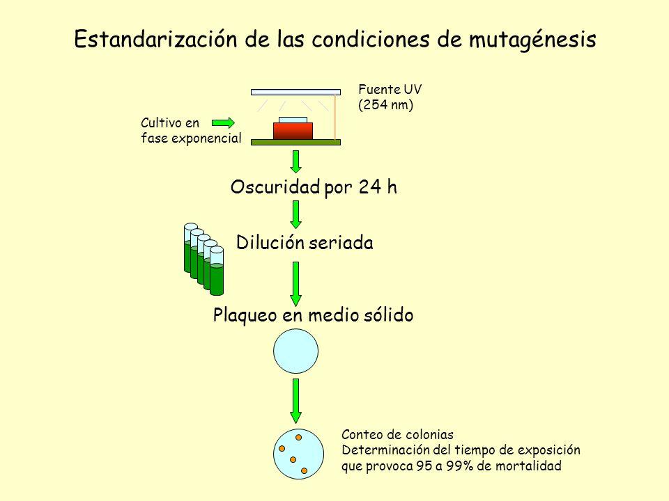 Oscuridad por 24 h Dilución seriada Plaqueo en medio sólido Conteo de colonias Determinación del tiempo de exposición que provoca 95 a 99% de mortalid