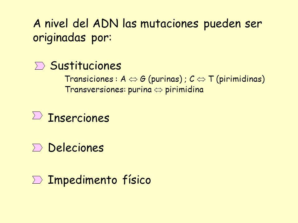 A nivel de la proteína las mutaciones pueden ser: A) Mutación silenciosa (AGG -> CGG ambos determinan Arg) B) Mutación de cambio de sentido - Sinónima (AAA Lys -> AGA Arg ambos aa básicos) - No sinónima (UUU Phe hidrofobico -> UCU Ser polar) C) Mutación sin sentido (CAG Gln -> UAG Stop) D) Mutación de cambio del marco de lectura (o de cambio de fase) E) Reversiones - Exacta (AAA Lys -> GAA Glu -> AAA Lys) - Equivalente (UCC Ser -> UGC Cys -> AGC Ser) (CGG Arg -> CCC Pro -> CAC His)