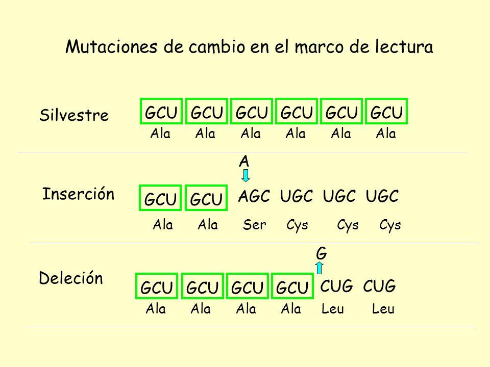 Mecanismos de acción generales de los mutágenos físicos y químicos : a) Sustitución de bases b) Modificación de bases c) Agentes intercalantes d) Impedimento físico