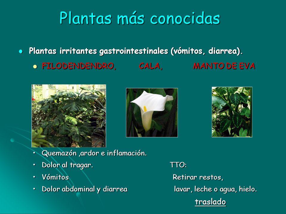 Plantas más conocidas Plantas irritantes gastrointestinales (vómitos, diarrea). Plantas irritantes gastrointestinales (vómitos, diarrea). FILODENDENDR