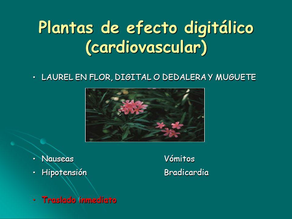 Plantas de efecto digitálico (cardiovascular) LAUREL EN FLOR, DIGITAL O DEDALERA Y MUGUETELAUREL EN FLOR, DIGITAL O DEDALERA Y MUGUETE NauseasVómitosN