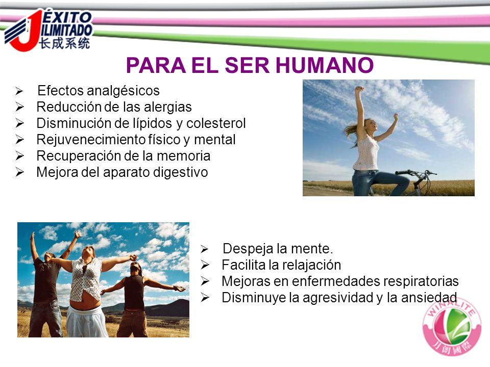 PARA EL SER HUMANO Despeja la mente. Facilita la relajación Mejoras en enfermedades respiratorias Disminuye la agresividad y la ansiedad Efectos analg