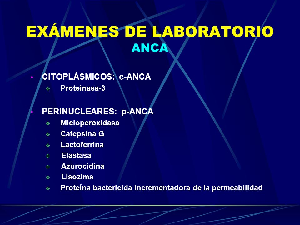 EXÁMENES DE LABORATORIO ANCA CITOPLÁSMICOS: c-ANCA Proteinasa-3 PERINUCLEARES: p-ANCA Mieloperoxidasa Catepsina G Lactoferrina Elastasa Azurocidina Li