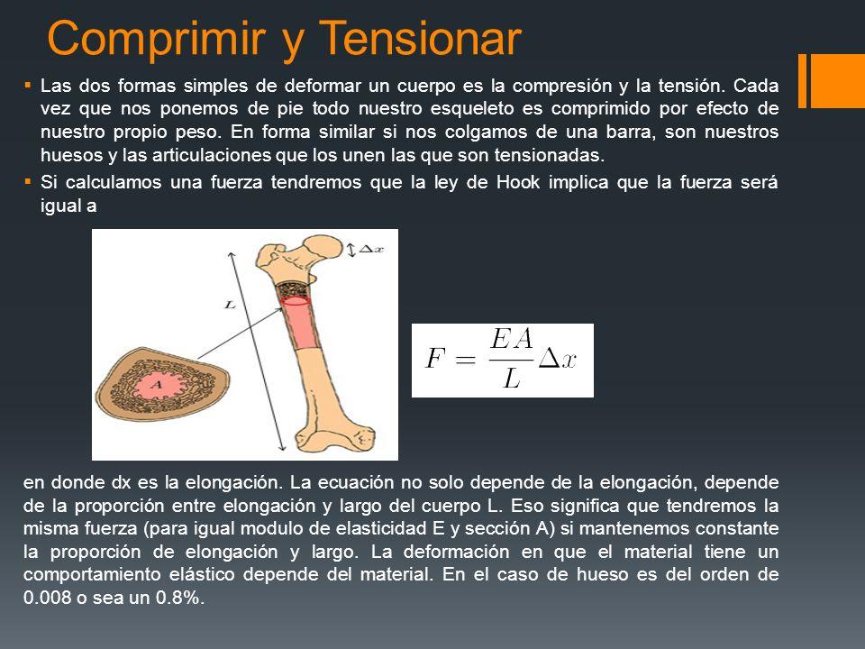 Comprimir y Tensionar Las dos formas simples de deformar un cuerpo es la compresión y la tensión. Cada vez que nos ponemos de pie todo nuestro esquele