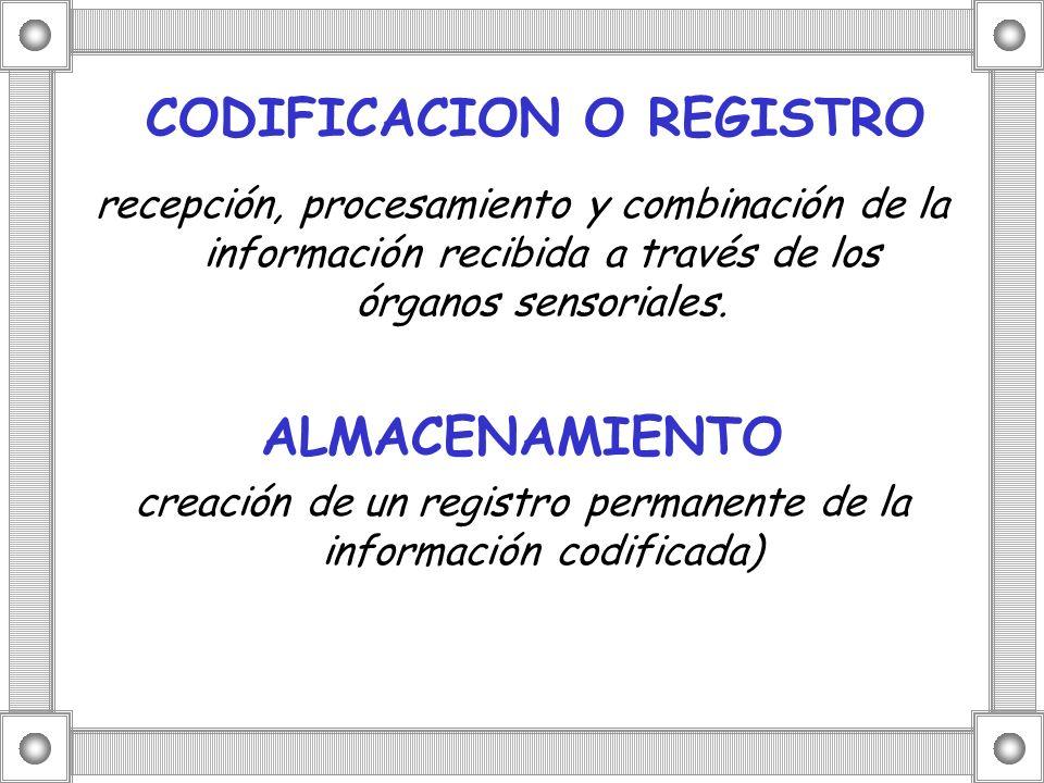 CODIFICACION O REGISTRO recepción, procesamiento y combinación de la información recibida a través de los órganos sensoriales. ALMACENAMIENTO creación