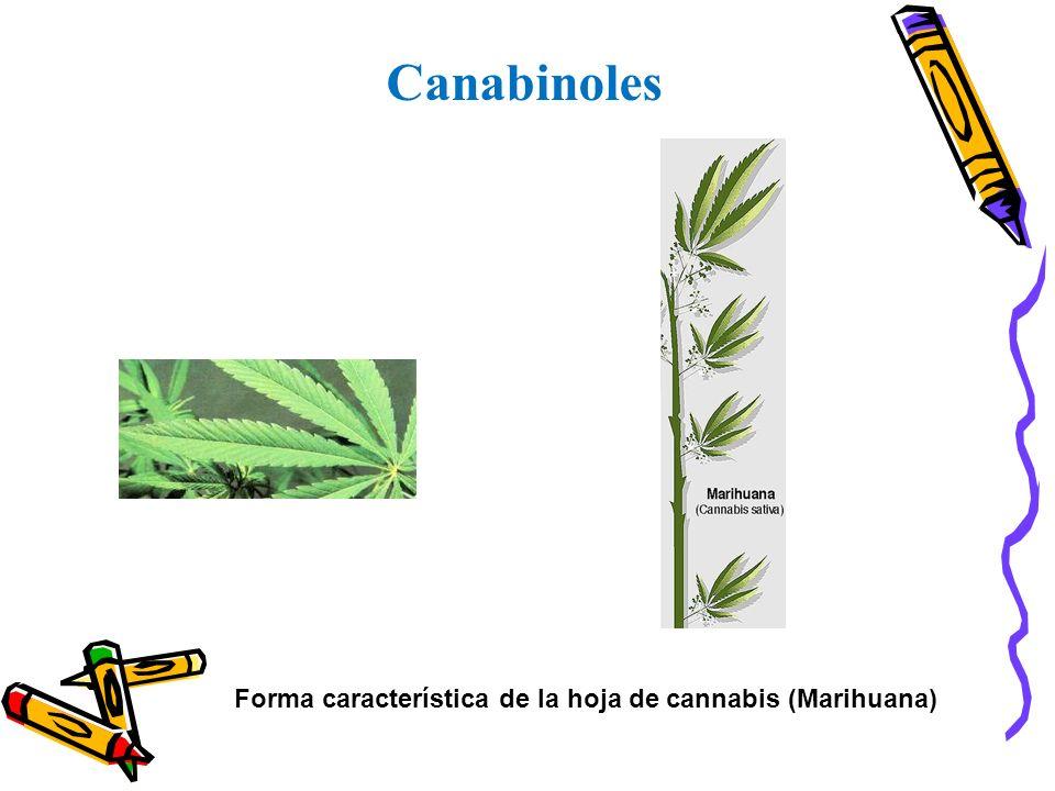 Canabinoles Forma característica de la hoja de cannabis (Marihuana)