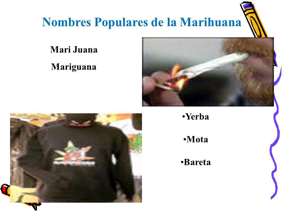 Nombres Populares de la Marihuana Mari Juana Mariguana Yerba Mota Bareta