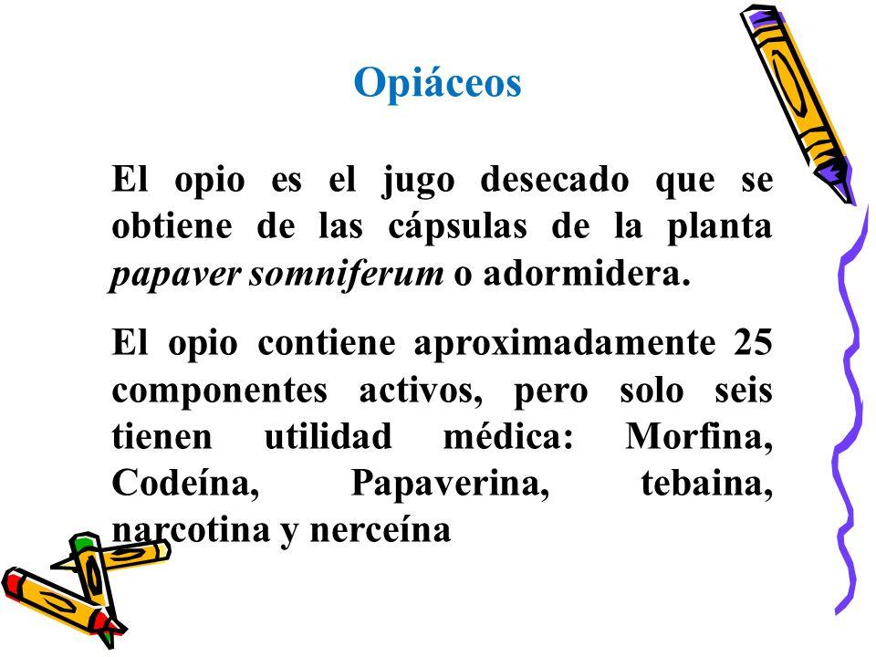 Opiáceos El opio es el jugo desecado que se obtiene de las cápsulas de la planta papaver somniferum o adormidera. El opio contiene aproximadamente 25