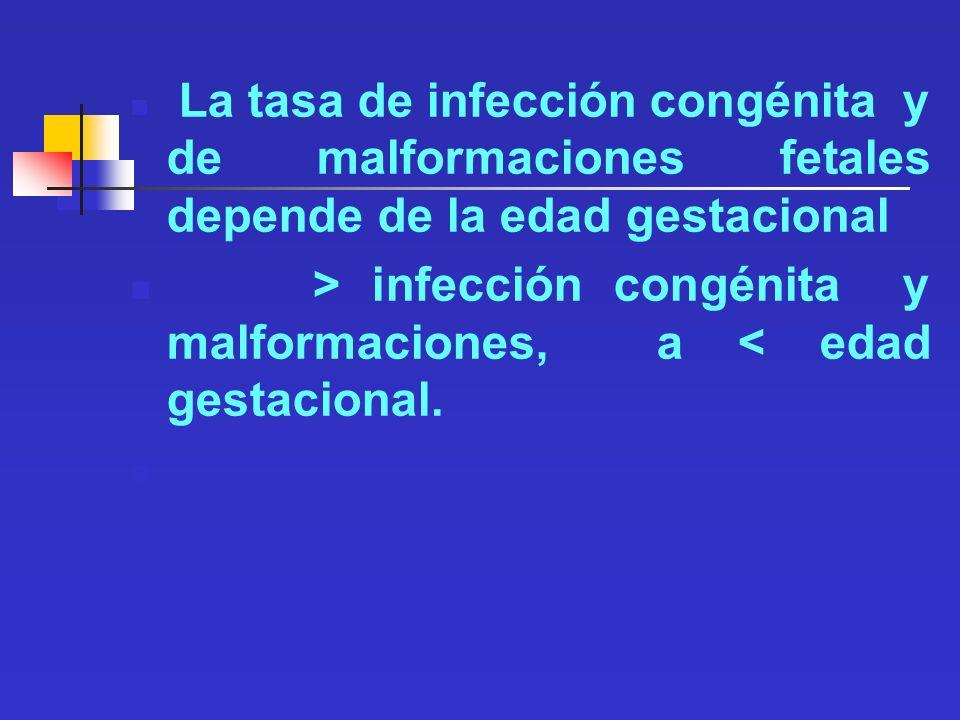 La tasa de infección congénita y de malformaciones fetales depende de la edad gestacional > infección congénita y malformaciones, a < edad gestacional
