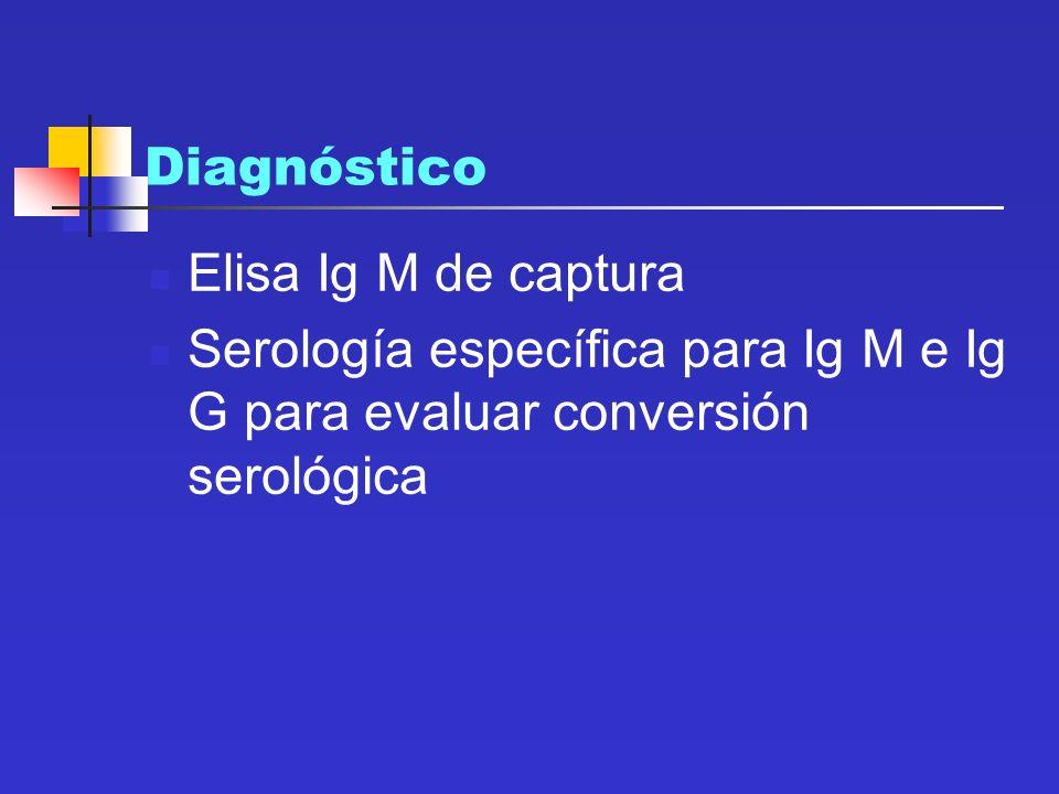 Diagnóstico Elisa Ig M de captura Serología específica para Ig M e Ig G para evaluar conversión serológica