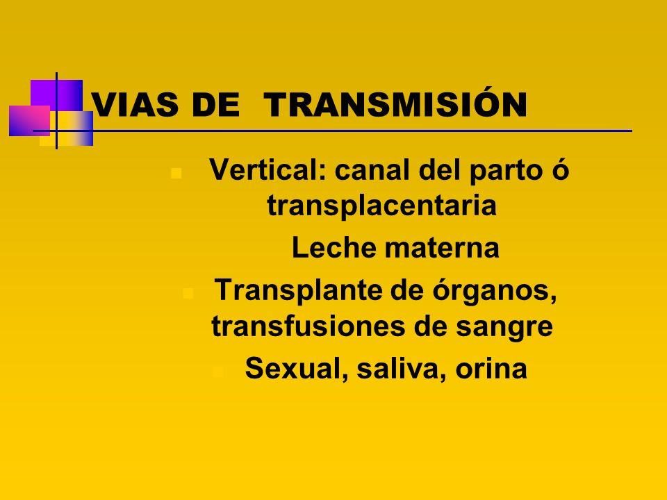VIAS DE TRANSMISIÓN Vertical: canal del parto ó transplacentaria Leche materna Transplante de órganos, transfusiones de sangre Sexual, saliva, orina