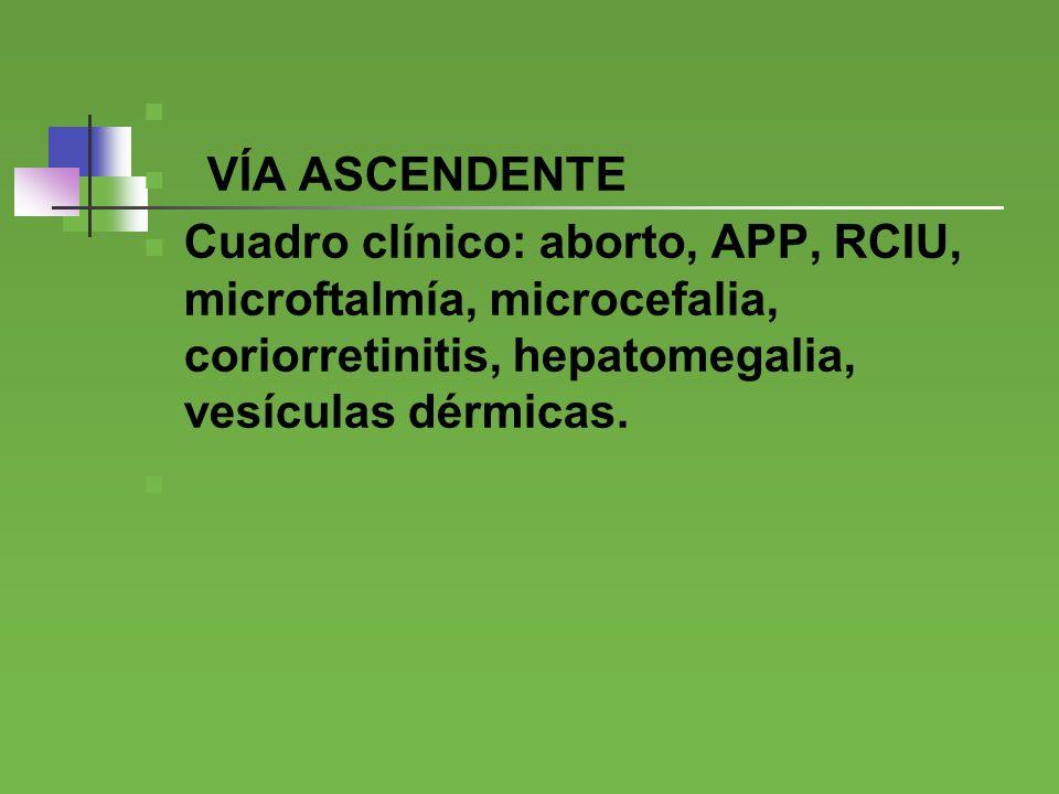 VÍA ASCENDENTE Cuadro clínico: aborto, APP, RCIU, microftalmía, microcefalia, coriorretinitis, hepatomegalia, vesículas dérmicas.