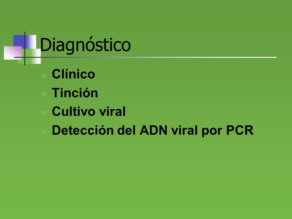 Diagnóstico Clínico Tinción Cultivo viral Detección del ADN viral por PCR