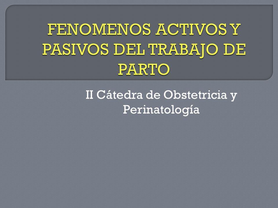 II Cátedra de Obstetricia y Perinatología