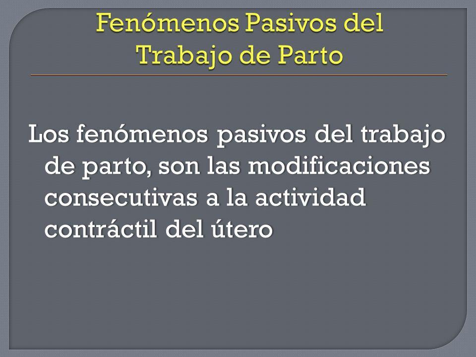 Los fenómenos pasivos del trabajo de parto, son las modificaciones consecutivas a la actividad contráctil del útero