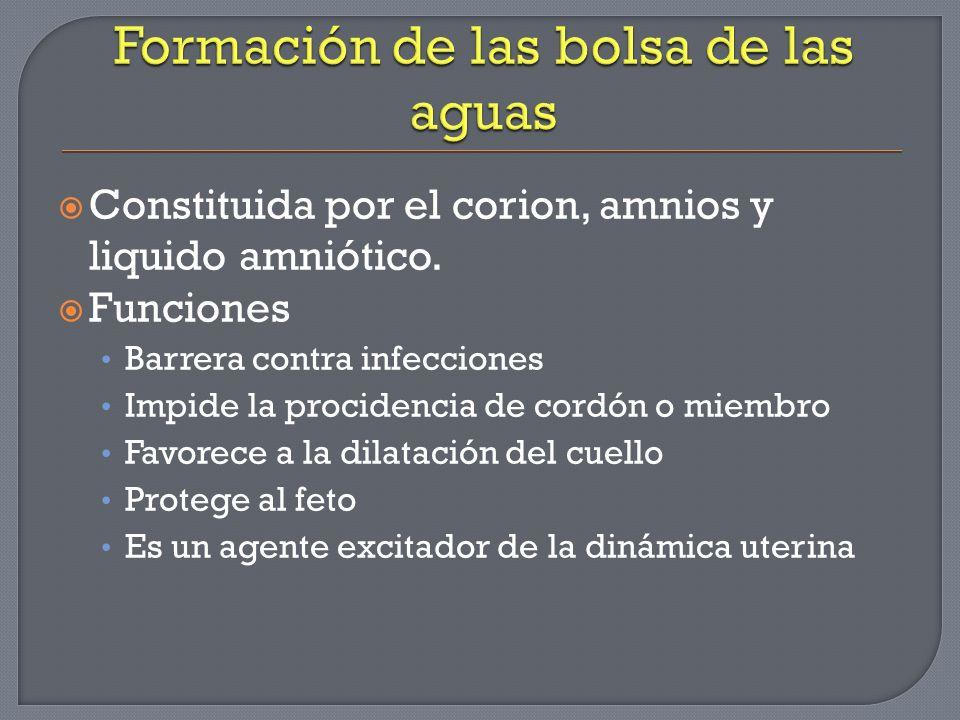 Constituida por el corion, amnios y liquido amniótico. Funciones Barrera contra infecciones Impide la procidencia de cordón o miembro Favorece a la di