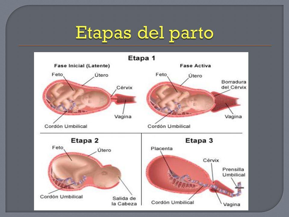 Se libera debido a las modificaciones cervicales Se origina por el mucus producido por el endocervix entremezclado con las secreciones vaginales y escasa sangre procedente del cuello.