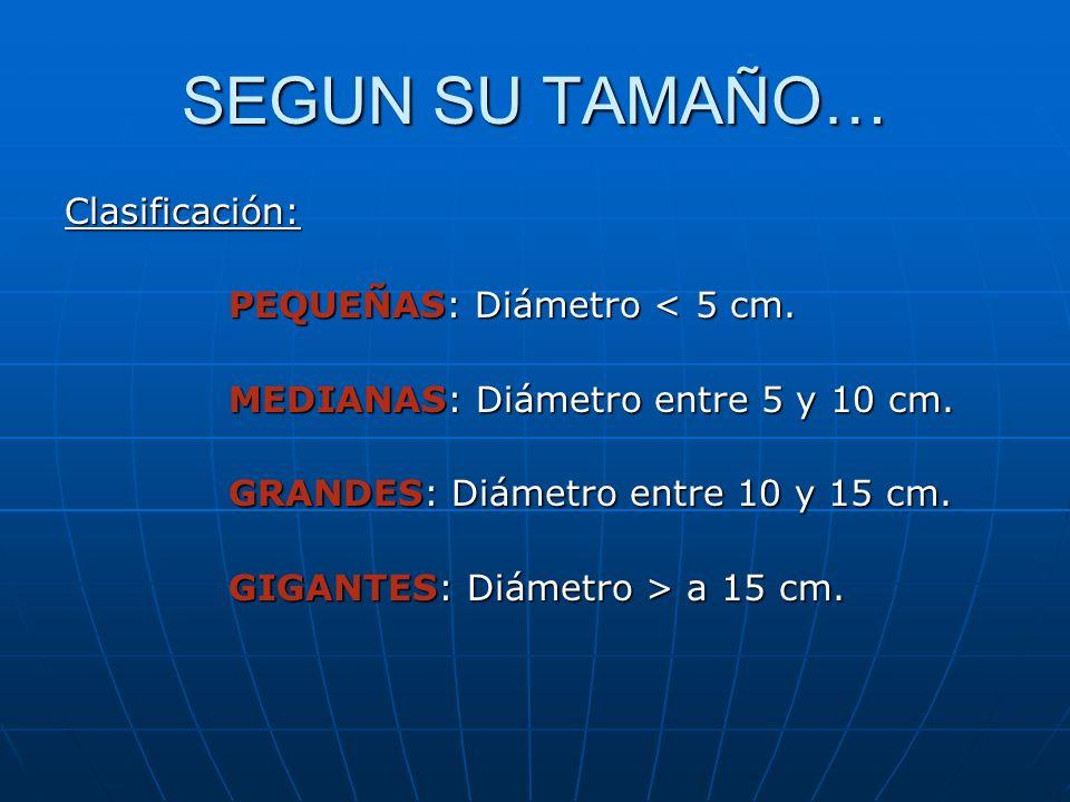 SEGUN SU TAMAÑO… Clasificación: PEQUEÑAS: Diámetro < 5 cm. PEQUEÑAS: Diámetro < 5 cm. MEDIANAS: Diámetro entre 5 y 10 cm. MEDIANAS: Diámetro entre 5 y