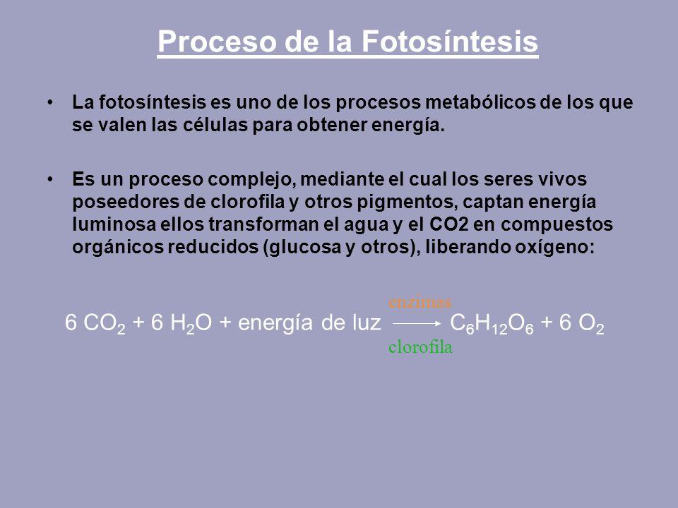 Proceso de la Fotosíntesis La fotosíntesis es uno de los procesos metabólicos de los que se valen las células para obtener energía. Es un proceso comp