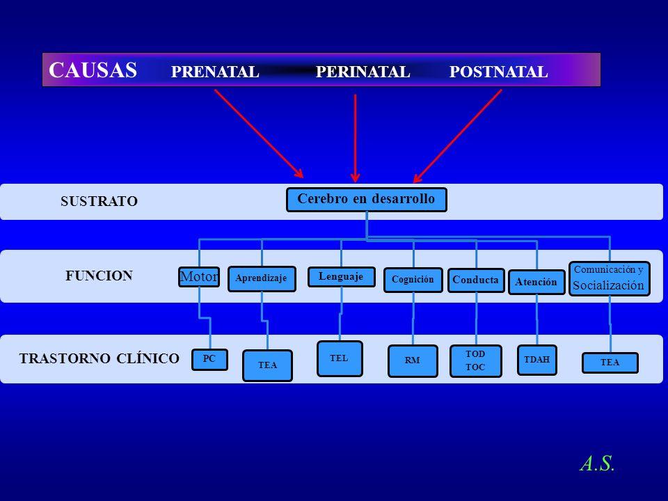 TRASTORNO CLÍNICO FUNCION SUSTRATO Cerebro en desarrollo Motor PC Aprendizaje TEA Lenguaje TEL Cognición RM Conducta TOD TOC Atención TDAH Comunicació