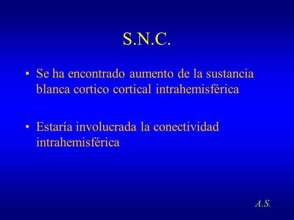 S.N.C. Se ha encontrado aumento de la sustancia blanca cortico cortical intrahemisférica Estaría involucrada la conectividad intrahemisférica A.S.
