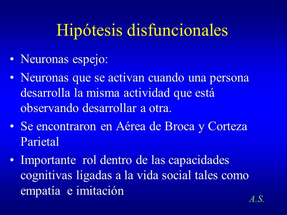 Hipótesis disfuncionales Neuronas espejo: Neuronas que se activan cuando una persona desarrolla la misma actividad que está observando desarrollar a o