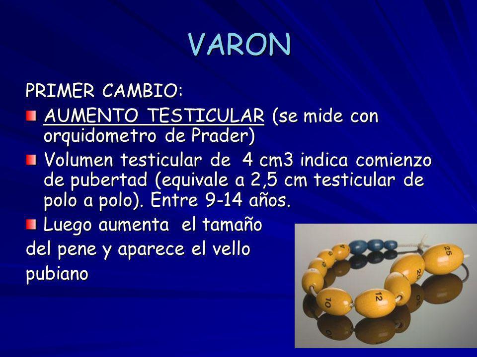 VARON PRIMER CAMBIO: AUMENTO TESTICULAR (se mide con orquidometro de Prader) Volumen testicular de 4 cm3 indica comienzo de pubertad (equivale a 2,5 c