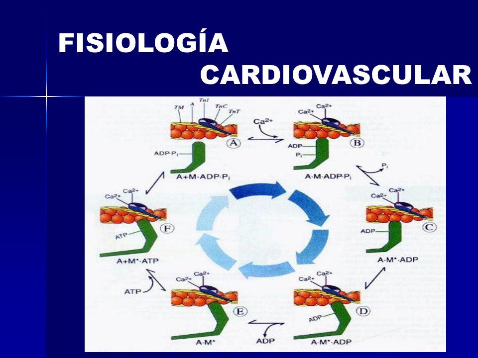 FISIOLOGÍA CARDIOVASCULAR CÉLULA MIOCÁRDICA TÚBULOS T RETICULO SARCOPLÁSMICO