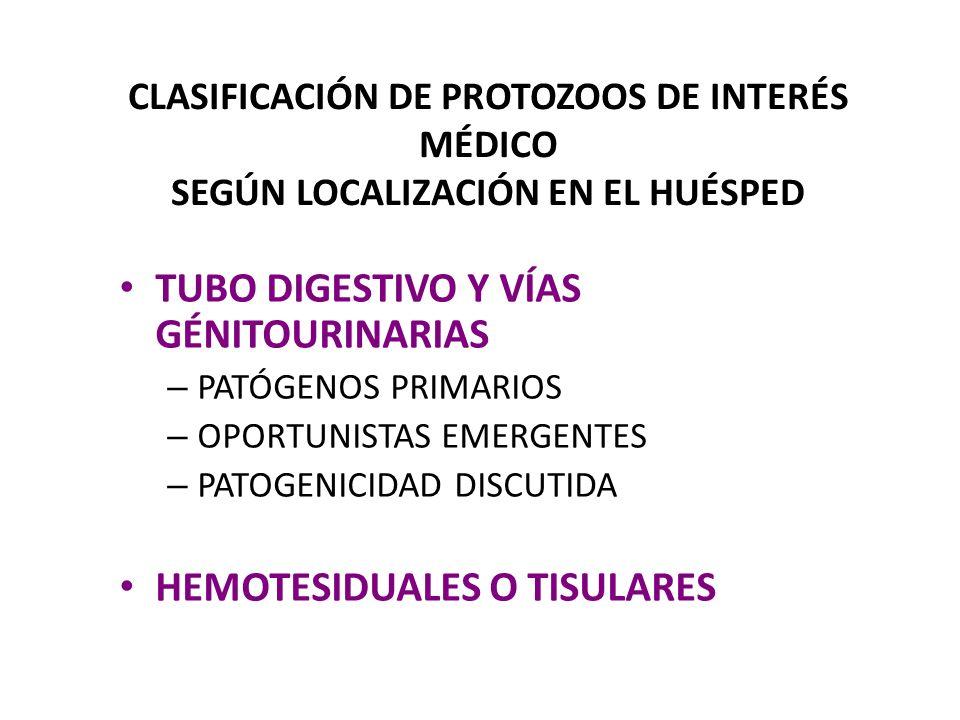 CLASIFICACIÓN DE PROTOZOOS DE INTERÉS MÉDICO SEGÚN LOCALIZACIÓN EN EL HUÉSPED TUBO DIGESTIVO Y VÍAS GÉNITOURINARIAS – PATÓGENOS PRIMARIOS Giardia lambliaGIARDIASIS Entamoeba histolyticaAMIBIASIS Trichomonas vaginalisTRICOMONIASIS – OPORTUNISTAS EMERGENTES Isospora belliISOSPOROSIS Cryptosporidium parvumCRIPTOSPORIDIOSIS Cyclospora cayetanensisCICLOSPOROSIS Enterocytozoon bieneusiMICROSPORIDIOSIS Encephalitozoon intestinalisMICROSPORIDIOSIS – PATOGENICIDAD DISCUTIDA Entamoeba coli Entamoeba coli Endolimax nana Endolimax nana Chilomastix mesnilii Iodamoeba bütschlii Blastocystis hominis Pentatrichomonas hominis