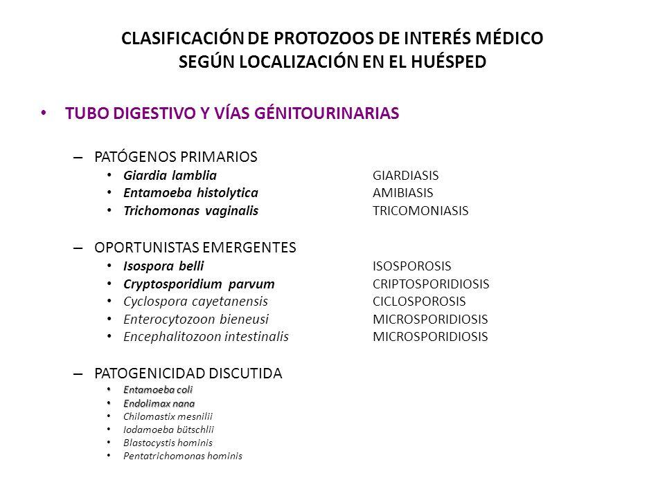 Ejemplos de protozoarios de interés médico Entamoeba histolytica TROFOZOÍTO Cryptosporidium sp.