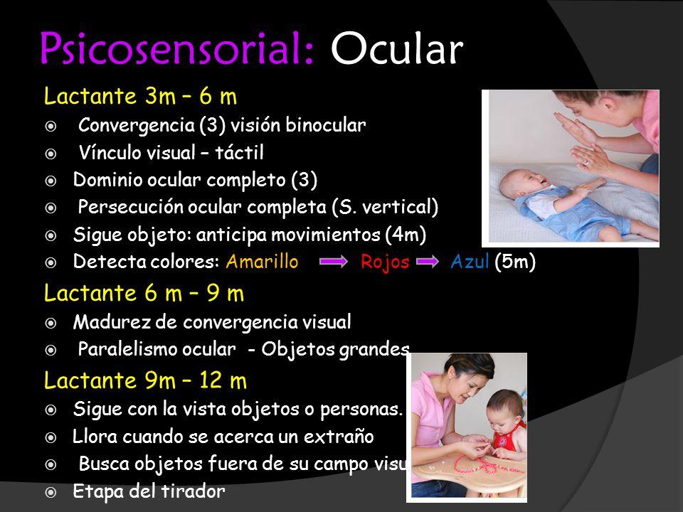 Psicosensorial: Ocular Lactante 3m – 6 m Convergencia (3) visión binocular Vínculo visual – táctil Dominio ocular completo (3) Persecución ocular comp