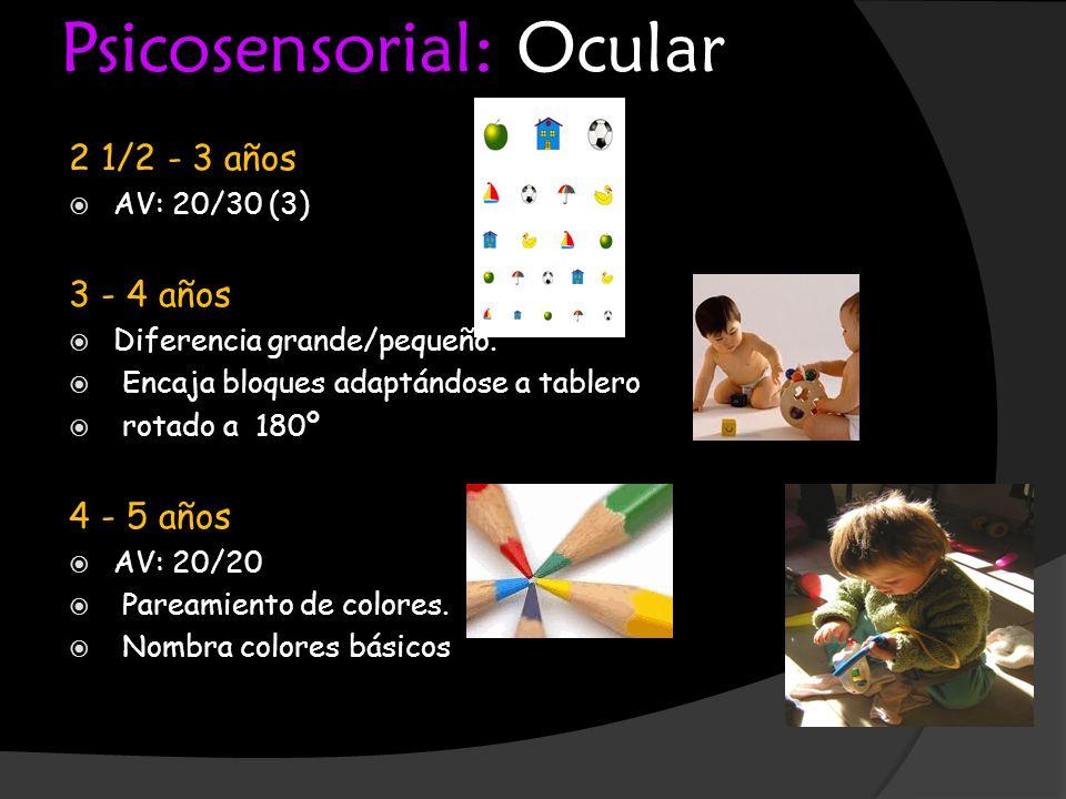 Psicosensorial: Ocular 2 1/2 - 3 años AV: 20/30 (3) 3 - 4 años Diferencia grande/pequeño. Encaja bloques adaptándose a tablero rotado a 180º 4 - 5 año