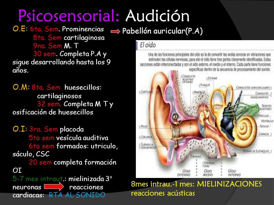 Psicosensorial: Audición O.E: 6ta. Sem. Prominencias 8ta. Sem cartilaginosa 9na. Sem M. T 30 sem. Completa P.A y sigue desarrollando hasta los 9 años.