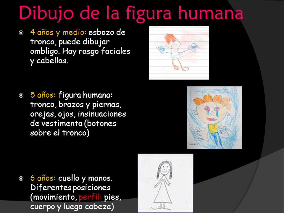 Dibujo de la figura humana 4 años y medio: esbozo de tronco, puede dibujar ombligo. Hay rasgo faciales y cabellos. 5 años: figura humana: tronco, braz