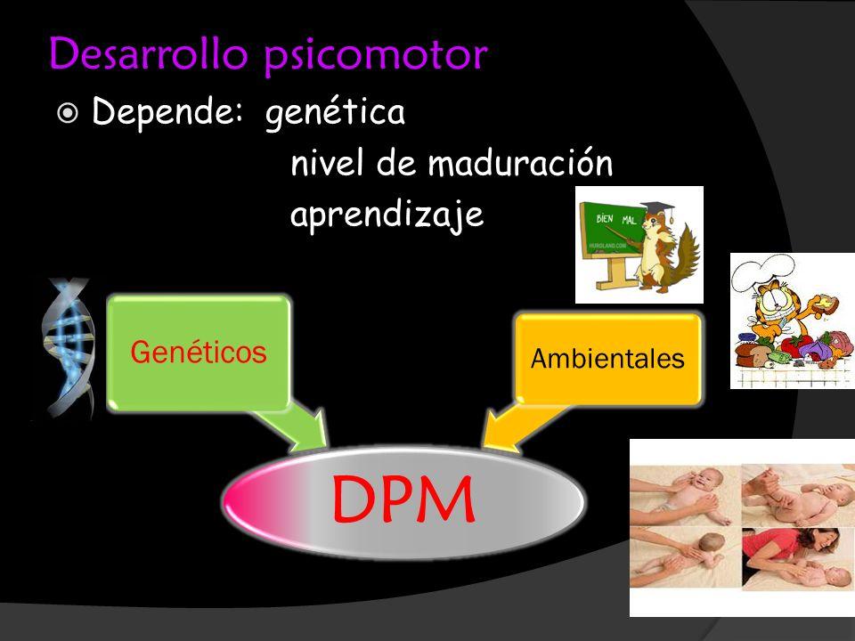 Desarrollo psicomotor Depende: genética nivel de maduración aprendizaje DPM Genéticos Ambientales